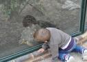En admiration devant les tortues - ZooParc de Beauval