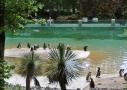 Le bassin des manchots à Beauval
